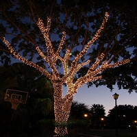 tree lighting company Tampa